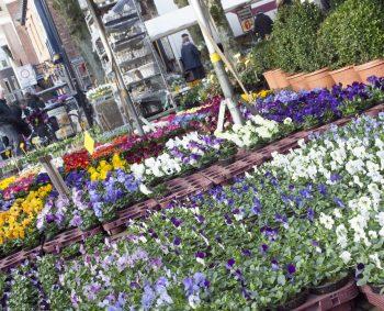 Volledige tuin assortiment op de markt